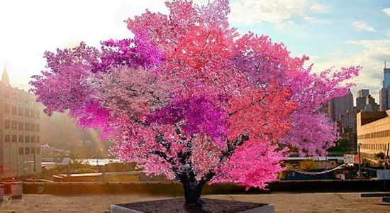 Jedno stablo 40 plodova