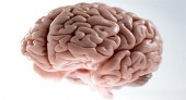 Mozak - velika misterija