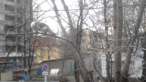 Vrana talentirano trola mačku :))