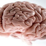 Mozak – velika misterija