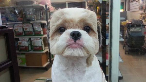 pseće frizure