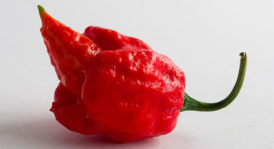 trinidad-scorpion-pepper-shu