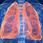 Ljudsko tijelo - pluća