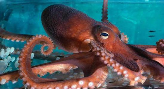 Hobotnice vide i pomoću kože