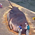 Nasukani kit na obali Seine