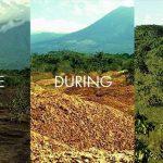 Kore naranče obnovile krajolik