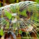 Paukova svila poput metala