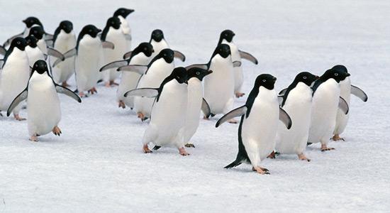 Ponor pingvina na Antarktici