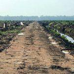Plantaže mijenjaju bioraznolikost