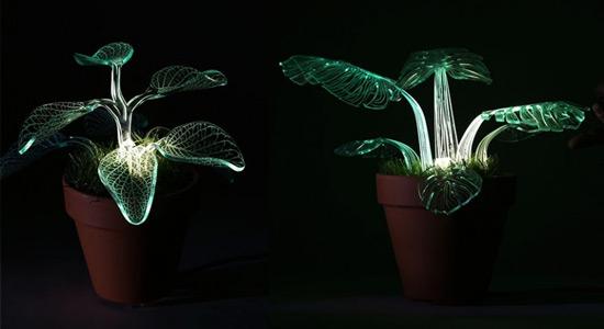 Svjetleće biljke kao rasvjeta