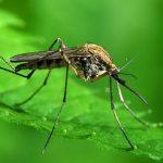 Sastojak zubne paste potencijalni lijek za malariju