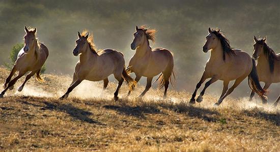Nova saznanja o divljim konjima