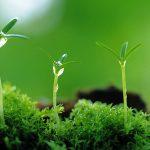 Biljke mijenjaju način obrane