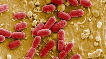 Aplikacija otkriva prisutnost bakterija u hrani