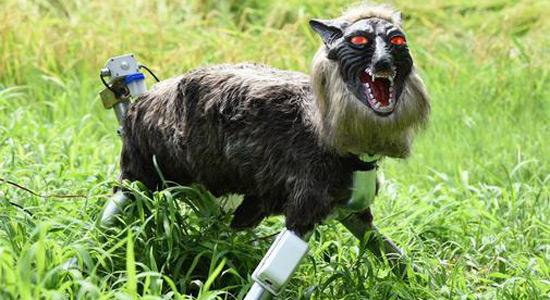 Roboti vukovi čuvaju usjeve