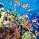 Karipsko more - otkrivene nove vrste riba
