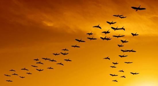 Unutarnji kompas ptica