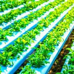 Uzgoj povrća bez prirodnih uvjeta