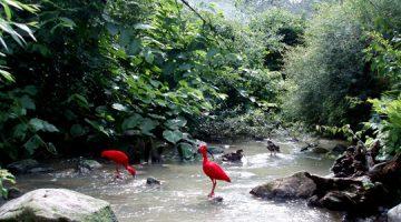 Nova uloga zooloških vrtova