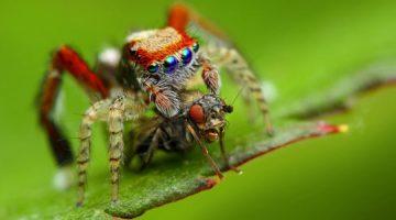 Uginuo najstariji pauk na svijetu