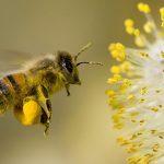Čuda prirode – pčele
