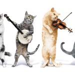 Znanstvenici  kreirali glazbu za mačke