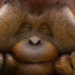 Pogledajte ove freakove iz životinjskog svijeta