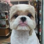 Zanimljive pseće frizure:))