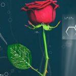Biljke i električna energija