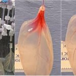 Regeneracija tkiva pomoću biljaka