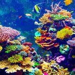 Predivan svijet koralja