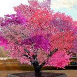Jedno stablo - 40 plodova