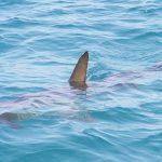 Lociranje morskih pasa tehnologijom
