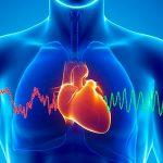 Srce kao način identifikacije
