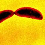 Bakterije osjećaju dodir