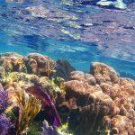 Morske spužve - najstarije na Zemlji