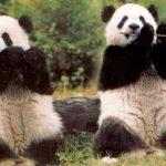 Veliki nacionalni park za pande