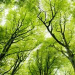 Otkriveni najstariji fosilni ostaci stabala?